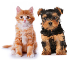 Health Care for Puppies & Kittens: Getting Off to a Good Start